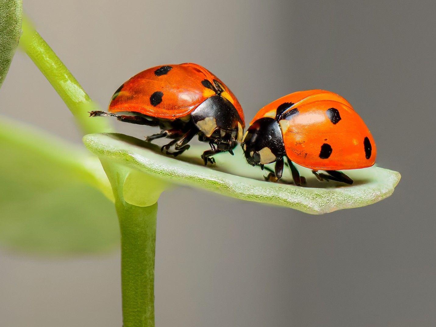 Básničky o chrobáčikoch a ríši hmyzu