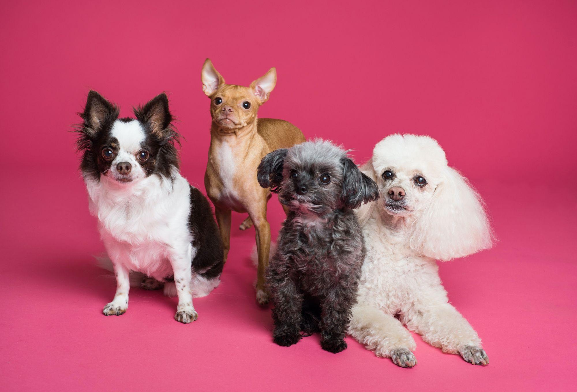 Básničky (nielen) pre milovníkov psov