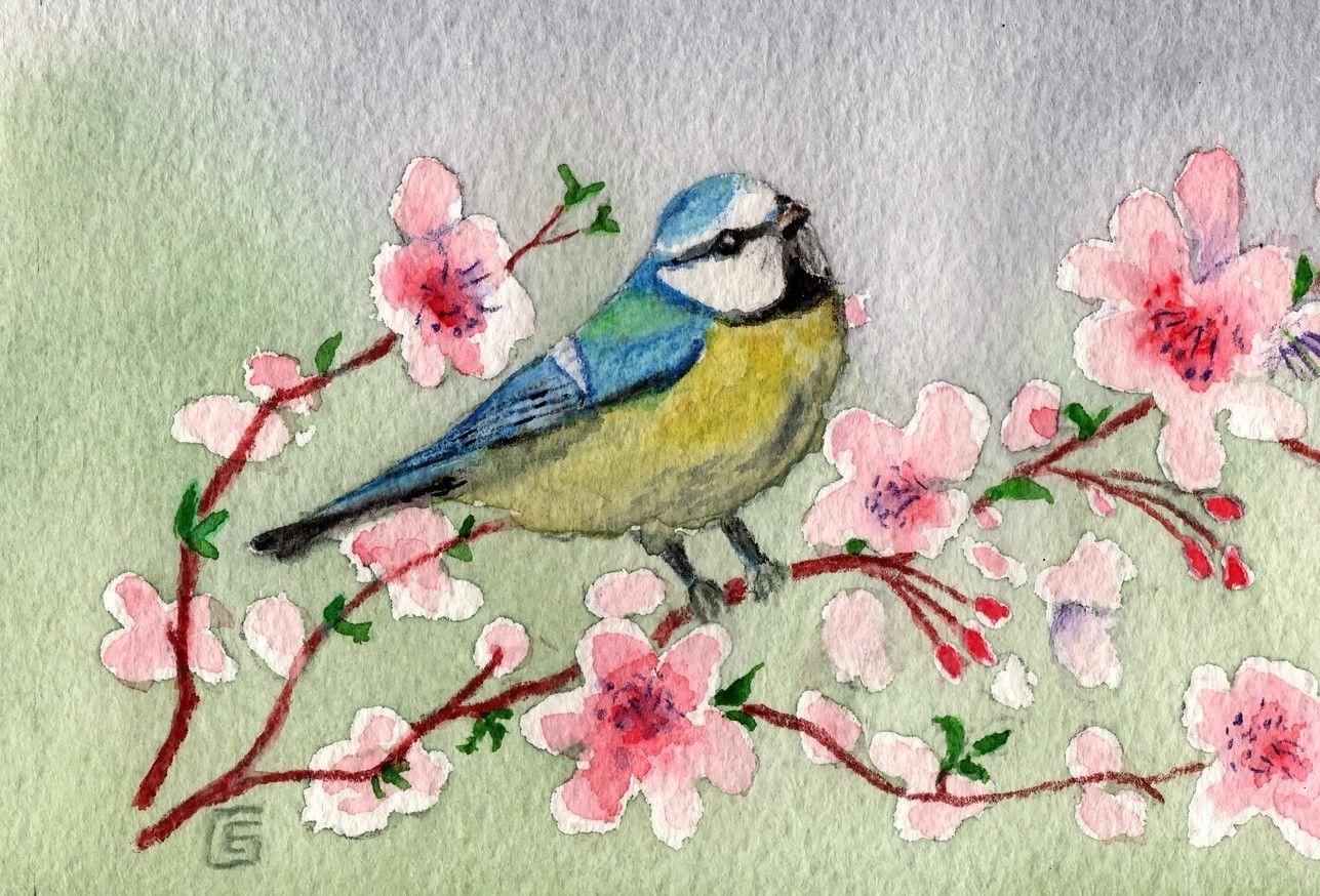 Básničky o vtáčikoch pre vnímavé deti