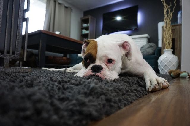 Ako bojovať s neželanými pachmi v domácnosti? Vône okolo nás majú vplyv aj na našu psychickú pohodu