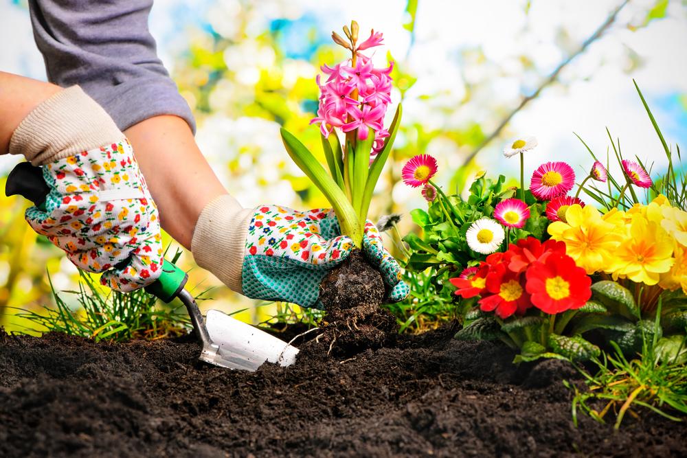 Ako si skrášliť svoju záhradu v lete